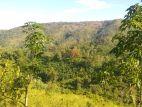 Land sale at Balangoda Ellepola