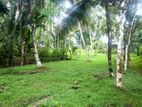 15 Perch with Trees Land for Sale in Horana