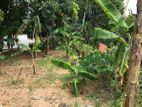 Land For Sale In Kegalle - 500m To Town (UC Area)