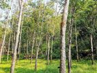 16 Acre Land Sale at Nebada, Kalutara