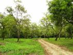 Agriculture Farm (Fruit ) for Sale in Dambulla