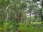 Rubber Land Near Kurudugaha