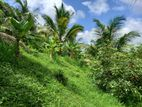 Land with Trees for sale in Horana