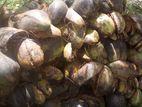 Pol Leli (coconuts Husk)