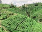Land for sale Nuwara Eliya - Hatton(Kudaoya)