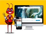 High Quality Website for Tourism Business