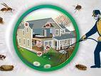 වේයන් මර්ධනය [Termite Control]