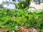 9.7 P Bare Land Sale at Pitakotte