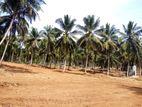 Kurunegala Thorayaya Lands for Sale