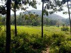 40 perch Rubber Land for sale in Handapangoda