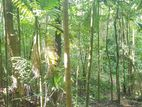 480 perches Land for Sale in Kandy - DORAGAMUWA