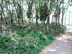 58 Perch Land for Sale in Meepe