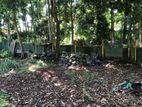 Cultivated Land in Nuwara Eliya