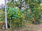 Land for Sale Kahanthota Road,Malabe