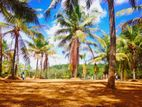 Land For Sale Kottawa Thalagala