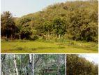 19 Acres Land Sale At Nebada Kalutara