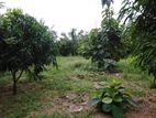 land for sale in galewela