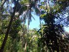 Land for sale in balangoda rathmalawinna (සාමාන්ය ගෙයක්ද ඇත)