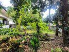 23.6 P Land Sale in Pelawatha
