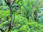 651 P Tea Land for Sale at Kadugannawa Kandy