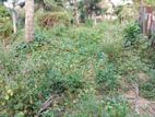 15 P Residential Land for Sale in Athurugiriya
