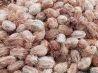 Coconuts | මාළු පොල් Maalu Pol