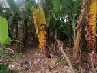 Super Land for Sale at - Ruhunupura