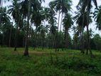Land for Sale - Nagollagoda
