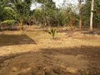 Land for Sale - Anuradhapura