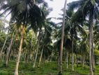 Land for Sale in Bulathsinhala