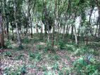 58 perch Land for sale in Bope