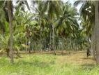 A Land for Sale in Puttalam