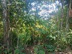 Land for sale in balangoda mugunamale