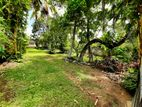 35P Residentia OR Commercia Land For Sale in Makuluduwa