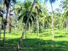 104.5 Acre Land for Sale At Mirigama Gampaha