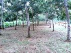 126 Perch Land for Sale in Getakossawa Rd