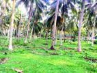 Coconut Estate for Sale in Hettipola