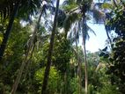 Land for sale in balangoda weligepola