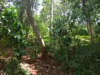 Residential Land for Sale at Madawala
