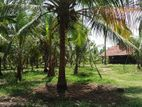 coconut land sell in chilaw