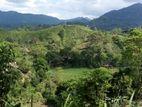 Tea Estate for Sale in Kalawana