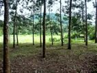 80 Perch Rubber Cultivated Land for Sale in Handapangoda
