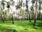 Coconut Estate for Sale in Ibbagamuwa