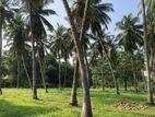 Coconut Estate For Sale In Madampe