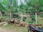 Commercial Land for Sale in Haloya - Kandy (C7-0758)