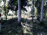 Land for Sale - Ja Ela