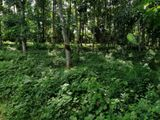 Land For Sale in Millewa