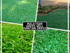 MALAYSIAN GARDEN GRASS INTERLOCK SUPPLIER