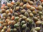 Foxtail Seeds