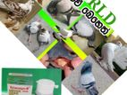 Pigeon Medicine- ( Trimezyn-B)